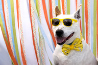 2015 Dog Day Afternoon/Woofstock